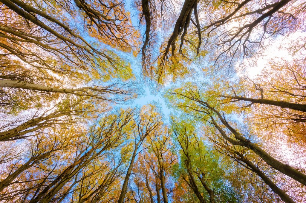 trees, tree canopy, forest-5605176.jpg